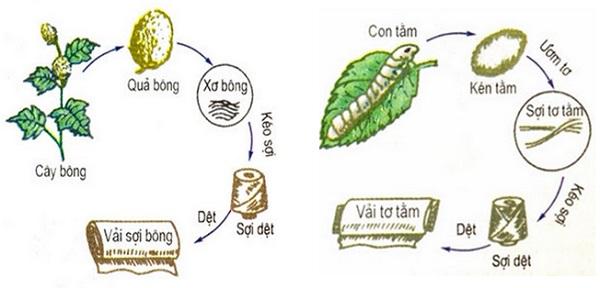 Quy trình sản xuất sợi vải thiên nhiên